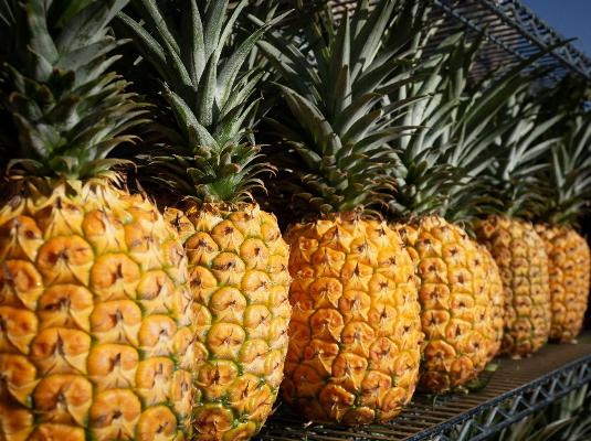 pineapple bio-based material